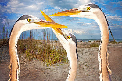 Avian Digital Art - Herons by Betsy Knapp