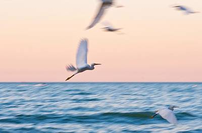 Photograph - Herons Flying Over The Sea  by Jose Maciel
