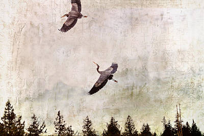 Bif Mixed Media - Herons In Flight Monotone by Peggy Collins
