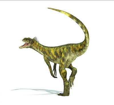 Prehistorical Photograph - Herrerasaurus Dinosaur by Leonello Calvetti