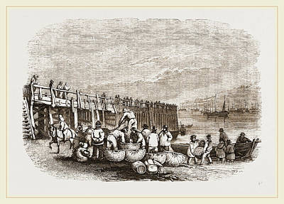 Herring Drawing - Herring-boats At Yarmouth Jetty by Litz Collection