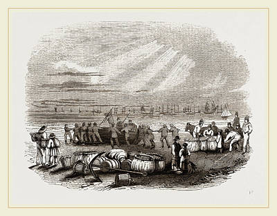 Herring Drawing - Herring-fishers On Yarmouth Beach by Litz Collection