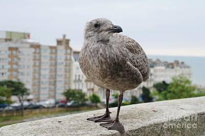 Photograph - Herring Gull Chick by David Fowler