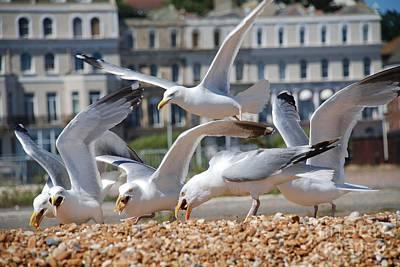 Photograph - Herring Gulls by David Fowler