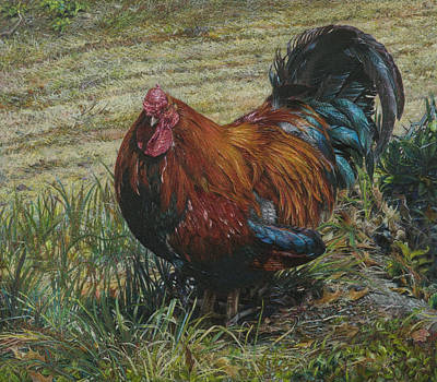 Farmyard Drawing - He's In The Garden by Lynn Bywaters