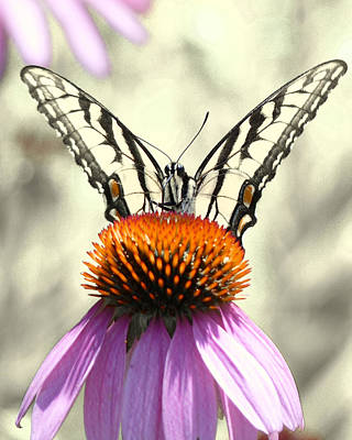Virginia Butterfly Photograph - Hey Bartender  by JC Findley