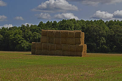 Photograph - Hey Hay by Bill Swartwout