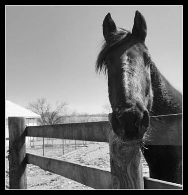 Forelock Photograph - Hey I Like You by Kathy Barney