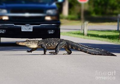 Photograph - Hey I'm Walkin Here by Kathy Baccari