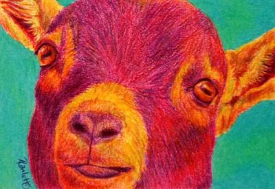 Drawing - Hey Kid by Ann Ranlett