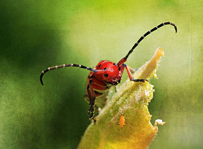 Photograph - Hey - What Are You Doing On My Leaf ? by Donna Kennedy