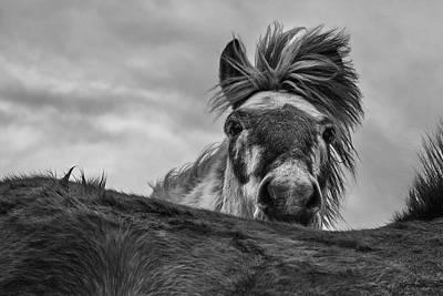 Horse Mane Photograph - Hi! by Bragi Ingibergsson -