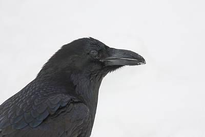 Hi Key Raven Art Print