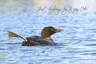 Loons Photograph - Hi There  by Donna Doherty