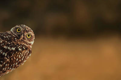 Burrowing Owl Wall Art - Photograph - Hi There! by Marcus Hennen