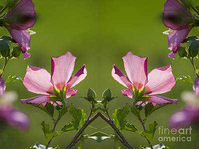 Hibiscus 07 Mirror Image Art Print by Thomas Woolworth