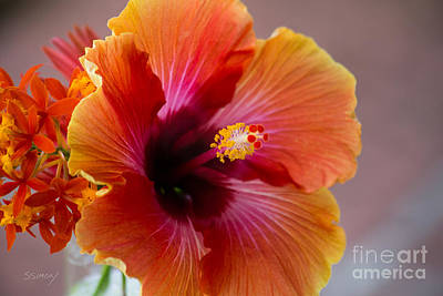 Photograph - Hibiscus 3 by Sally Simon