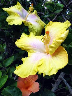 Photograph - Hibiscus 39 by Dawn Eshelman