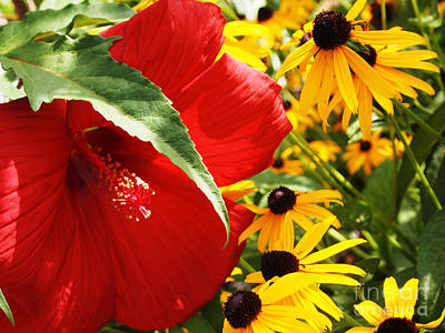 Hibiscus And Black Eyed Susans Art Print