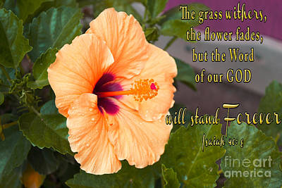 Isaiah 40 Photograph - Hibiscus And The Word Of God by Beverly Guilliams