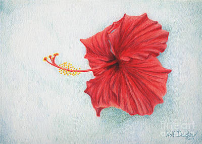 Conservatory Drawing - Hibiscus  by Wolf Daughter