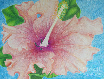 Drawing - Hibiscus by Cecilia Stevens