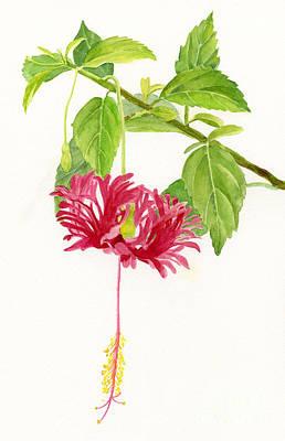 Hibiscus Chinese Red Lantern Art Print by Sharon Freeman