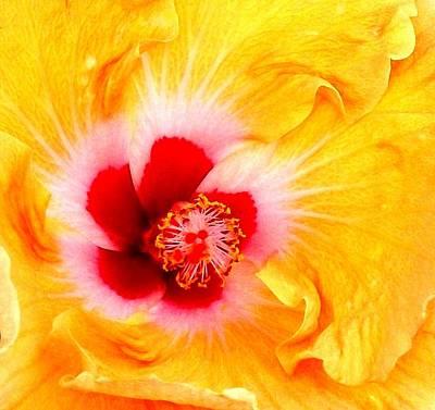 'hibiscus Explosion' Art Print