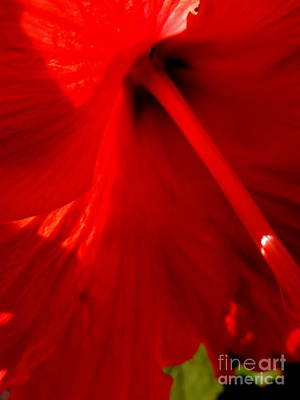 Photograph - Hibiscus Flora by Michael Hoard