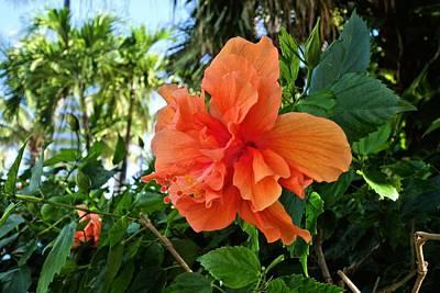 Photograph - Hibiscus Flower by Jane Girardot