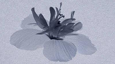 Manipulated Digital Photograph - Hibiscus Flower by Vishwanath Bhat