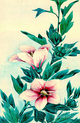 Hibiscus Flowers 1870 Art Print by Padre Art