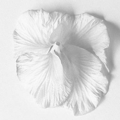 Photograph - Hibiscus II by Michael Moschogianis