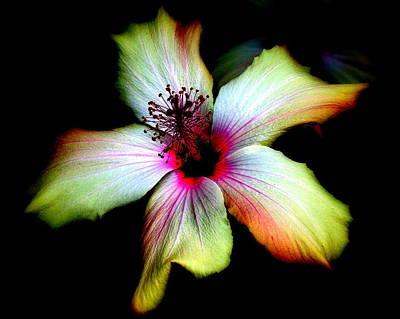 Photograph - Hibiscus by Jodie Marie Anne Richardson Traugott          aka jm-ART