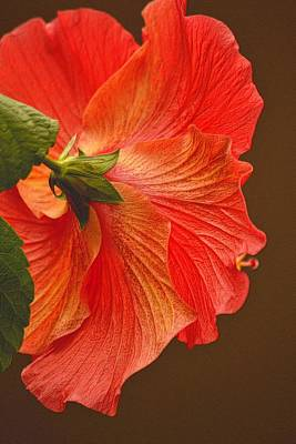 Photograph - Hibiscus On Brown by Nadalyn Larsen