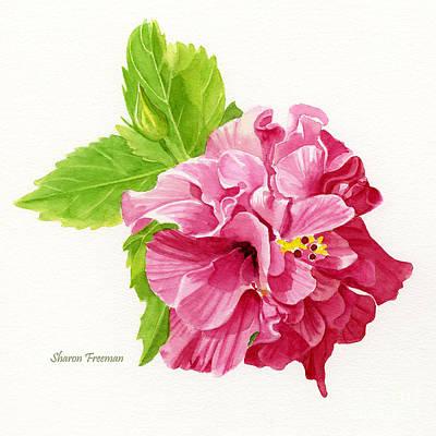 Hibiscus Rosa-sinensis Art Print by Sharon Freeman