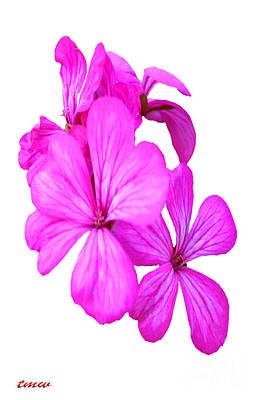 Hibiscus Set One Art Print