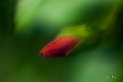 Art Print featuring the photograph Hibiscus Softly 1 by Travis Burgess