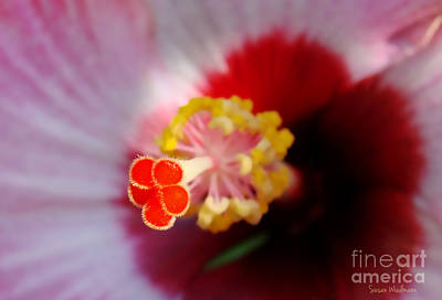 Photograph - Hibiscus Stigma Pads by Susan Wiedmann