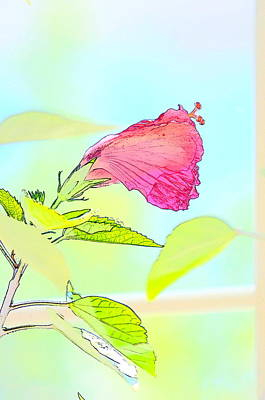 Hibiscus Unbloomed Art Print