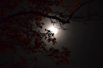 Photograph - Hickory By Moonlight by Maria Urso