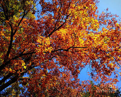 Photograph - Hickory Tree In Autumn by Betsy Foster Breen