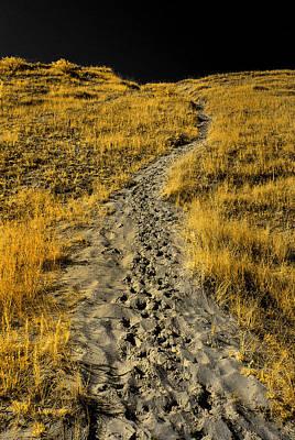 Hidden Beach Dune Path Art Print