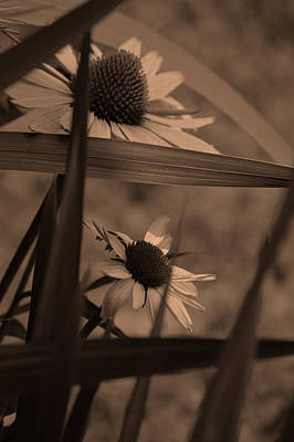 Cone Flower Photograph - The General Caged Coffee by Lesa Fine