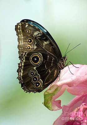 Art Print featuring the photograph Hidden Beauty Of The Butterfly by Debbie Green