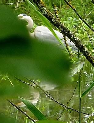 Hidden Bird White Art Print by Susan Garren