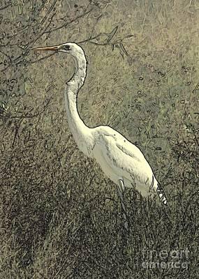Photograph - Hidden Egret by Carol Groenen