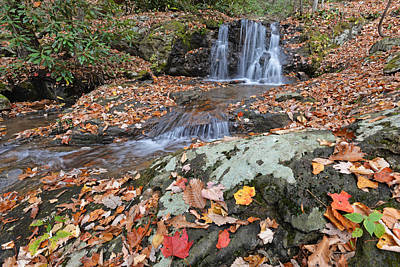 Photograph - Hidden Falls Leaves Of Gold by Alan Lenk