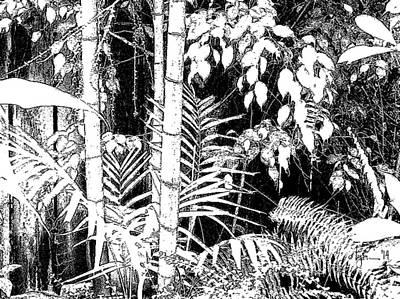 Art Print featuring the photograph Hidden Glade by Angela Treat Lyon