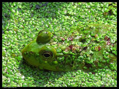 Hidden Green Frog Art Print by Duane Loya